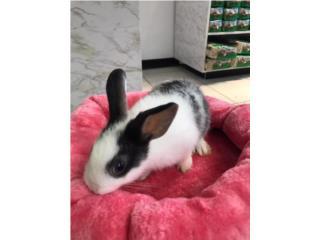 Conejos enanos y guimos, Family Pets