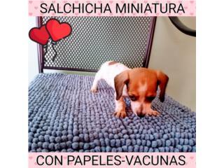 ESPECTACULAR MINI TINY SALCHICHA CON PAPELES, Puppy world