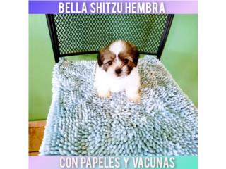 ESPECTACULAR BELLA SHITZU CON PAPELES, Puppy world