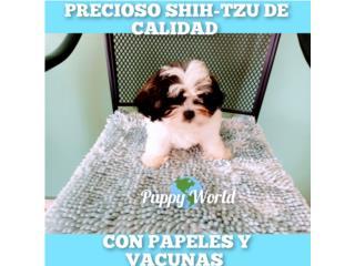 PRECIOSO SHITZU DE CALIDAD CON PAPELES, Puppy world