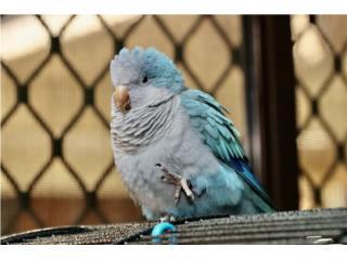 Quakers Azules Bebes, Preciosas & HABLADORAS , Vivian
