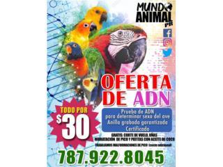 ADN, Anillas y  Cortes de Vuelo para Aves !!  Puerto Rico