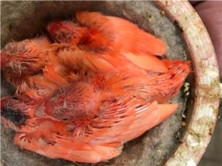 Puerto Rico Canarios varios colores, Perros Gatos y Caballos