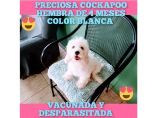 BELLA COCKAPOO HEMBRA 4 MESES-VACUNADA, Puppy world