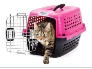 Kennels de trasporte, Isabela Pet Shop