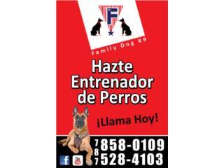 Puerto Rico , Perros Gatos y Caballos