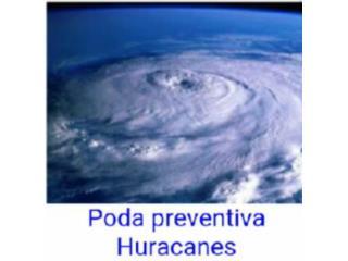 San Juan-Hato Rey Puerto Rico Equipo Comercial, Poda preventiva Huracanes