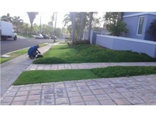 Servicio de fumigacion y mantenimiento de piscinas Clasificados Online  Puerto Rico