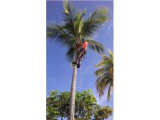 Trujillo Alto Puerto Rico Selladores Techo, Poda-Corte Palmas y Arboles