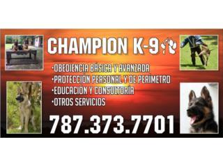 , Mascotas Puerto Rico