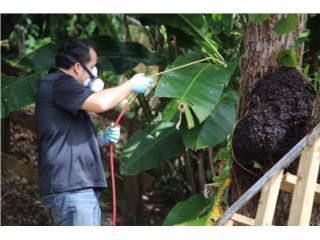San Juan Puerto Rico Enseres Estufas, EXPERTOS CONTROL DE PLAGAS Y COMEJEN!