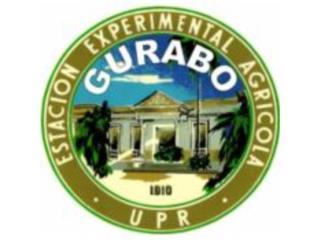 Agricola Producto QuedateEnCasa ClasificadosOnline Puerto Rico